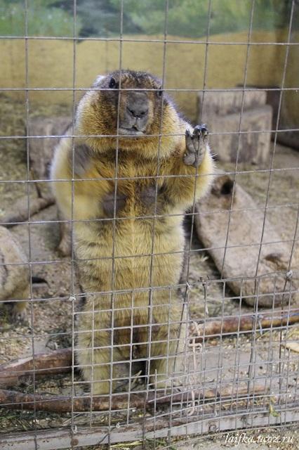 Зооцентр Алабай